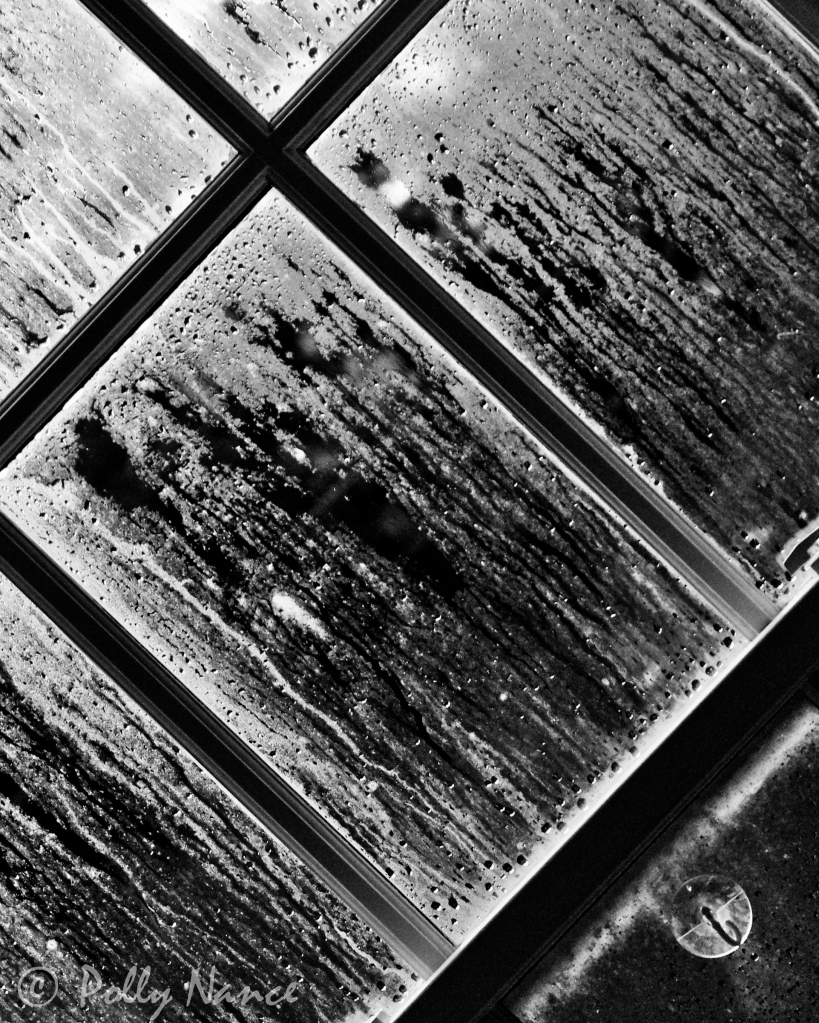 Black-and-White and All Natural Oldenburg Drips of Rain