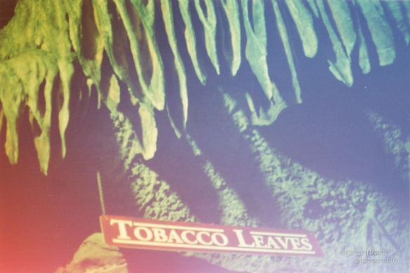 Tobacco Leaves Formations at Ruby Falls. Polly Nance. Film photograph. 2012.