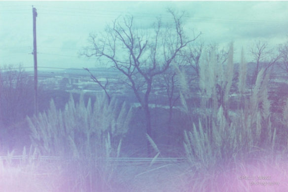 Looking Out from the Parking Lot at Ruby Falls. Polly Nance. Film photograph. 2012.