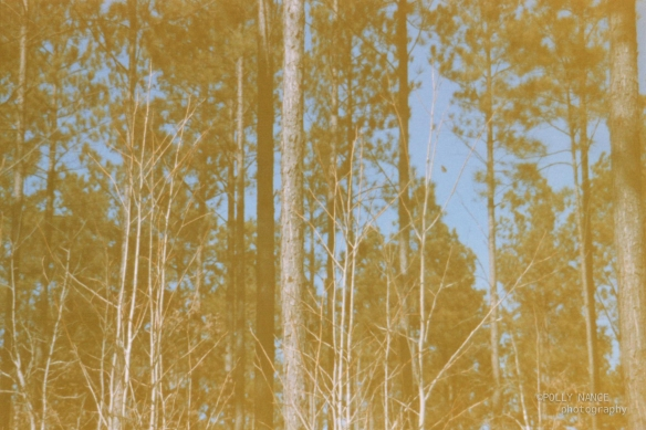 Trees in Tignal. Film photograph. Polly Nance. 2012.