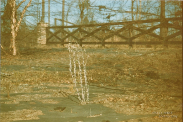 The Lone Weeds. Film photograph. Polly Nance. 2012.