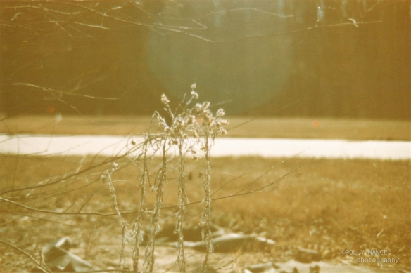 Light and Some Pretty Weeds. Film photograph. Polly Nance. 2012.